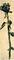 Bild Nr. 12896 — Michaelis, Ohne Titel (Rose)