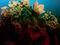 Bild Nr. 12955 — Mader, Ohne Titel (Farbkomposition)