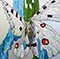 Bild Nr. 17707 — Klose, Shattered butterfly: Apollofalter