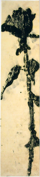 Bild Nr. 12897 — Ulrike Michaelis (1958-2015): Ohne Titel (Rose) (um 1997)