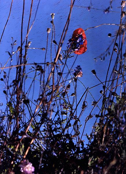 Bild Nr. 16678 — Alex Mader (*1994): Garden I (2020)