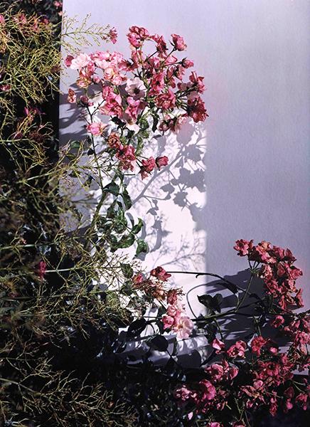 Bild Nr. 16682 — Alex Mader (*1994): Garden II (2020)