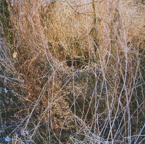 Bild Nr. 3842 — Wolf-Dietrich Weissbach (*1952): Ohne Titel (2010)